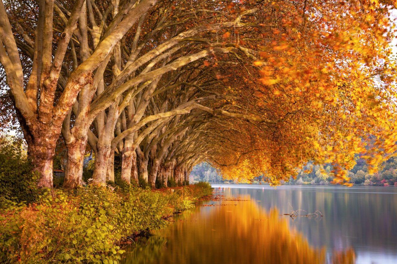 autumn-4667080_1920-1280x854.jpg